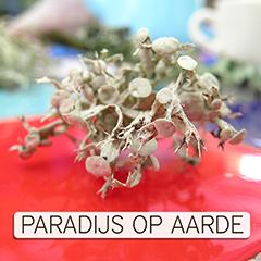 Paradijs Op Aarde Nu Logo